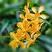Yellow is Hope (marktrinh1) Tags: vungtau bàrịa–vũngtàu vietnam vn