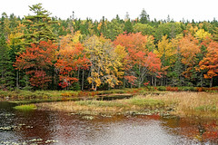 DSC03199 - Along the Lake (archer10 (Dennis) 196M Views) Tags: timberlea sony a6300 ilce6300 18200mm 1650mm mirrorless free freepicture archer10 dennis jarvis dennisgjarvis dennisjarvis iamcanadian novascotia canada autumn fall colours trees