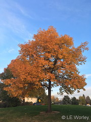 October 21, 2018 - Fall colors in Thornton. (LE Worley)