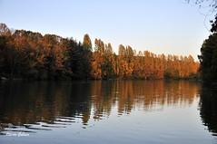 Couleurs d'automne à Maisons-Alfort (ogollain) Tags: automne maisonsalfort marne