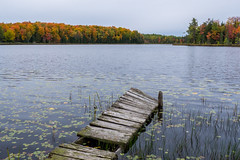 At the edges of viability (Wicked Dark Photography) Tags: landscape wisconsin abandoned autunm boardwalk decay derelict dock fall foliage forest lake nature water woods