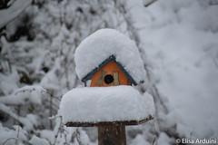 Snow on bird house (ElisaArduini) Tags: nature natura outdoor palombara palombarasabina italia italy neve bird birds uccelli snow photography fotografia flickr photo photos foto nikon d3200 nikond3200