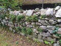 Wilderswil scenes 127 (SierraSunrise) Tags: europe switzerland wilderswil wall stone