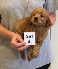 Kizzie Girl 4 pic 4 12-9