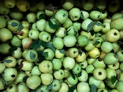 Green Apples 3 (Lux Llama Productions) Tags: barn apple picking fall natick framingham lookout farms family couple 2018 apples many plenty lot hay leaf leaves crate box peach pear plant plants maple trees tree grass grape grapes bench orange picnic red