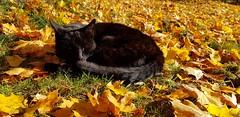 #Minimolly genießt die #Herbstsonne   #Morgeninpression #Morgen #Sonne #Natur #Herbst #Farbenspiel (Mumes World) Tags: farbenspiel herbstsonne morgeninpression morgen natur sonne minimolly herbst