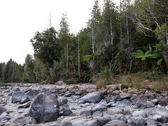 Lake Brunner Shore (treegrow) Tags: newzealand moana lakebrunner nature lifeonearth