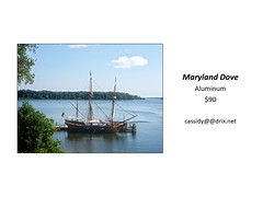 "Maryland Dove • <a style=""font-size:0.8em;"" href=""https://www.flickr.com/photos/124378531@N04/31488020288/"" target=""_blank"">View on Flickr</a>"