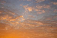 Orange Sky Gewande (Photography by Martijn Aalbers) Tags: sunrise zonsopgang sun zon nature natuur gewande shertogenbosch denbosch noordbrabant brabant thenetherlands nederland canoneos77d ef1740mmf40lusm