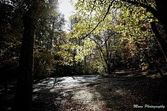 Natures Light. #nature (coleton.moon) Tags: light soft warm colorful color fall photo photography nature