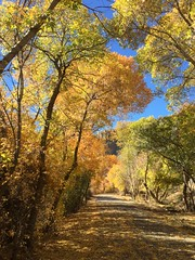 IMG_2834 (August Benjamin) Tags: provo provoriver provorivertrail fall utah mountains provocanyon fallcolors autumn trees leaves orem utahvalley jogging