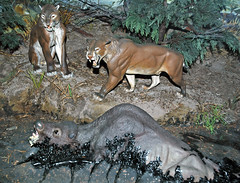 Diorama of the La Brea Tar Pits, California (Pleistocene) 3