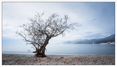 A quiet tree on a quiet evening! (Wilco1954) Tags: leefilters corsica beach tree capcorse baiedesaintflorent saintflorent stillness longexposure shells