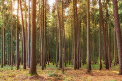 Into the woods (w.lichtmagie) Tags: wald sonne hell warm gegenlicht herbst canonefs1755 ngc wood sun autumn vilsheim landshut niederbayern bayern deutschland