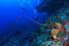 踢快點,否則你會被鞭打 kick quickly, otherwise you will be whipped. (Jeanhom Chen) Tags: panasonic gx1 olympus8mmf18pro zendp170 underwater coral greenisland 綠島 海底 珊瑚