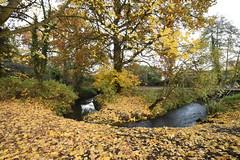 Emm Brook By Kingfisher Bridge, Wokingham (rq uk) Tags: rquk nikon d750 nikond750 afsnikkor1835mmf3545ged emmbrook kingfisherbridge brook leaves autumn woosehill wokingham