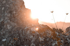 The wild (Celia G. Photography) Tags: wild wildlife nature 50mm nikon photography sun sunset spain plants details sky rocks