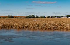 Floyd River - Flooding in Le Mars, Iowa (Tony Webster) Tags: floydriver iowa lemars plymouthstreet agriculture farm farming farmland fields flood floodstage flooded flooding harvest river waterlevels unitedstates usa iowafloodcenter