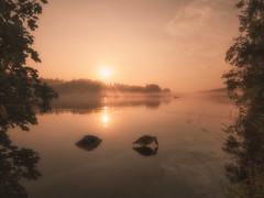 Hey there (petrisalonen) Tags: sunrays finland suomi nature luonto joki river heijastus reflection summer goose light mist orange clouds