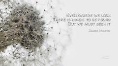280/365 - Daily Haiku: Magic (James Milstid) Tags: dailyhaiku haikuaday haiku haiga poetry jemhaiku dandelion dewdrops raindrops
