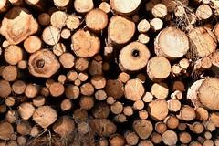 Woodpile (rustyruth1959) Tags: twigs branch forestry brown woodland nature circles timber treerings tree cutwood outdoor woodpile logs wood bomlitz lowersaxony germany europe nikon1855mm nikond5600 nikon takeaim