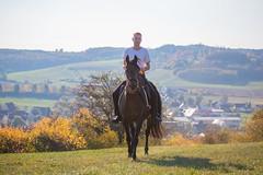Basim_OS180010 (OliverSeitz) Tags: elbasim wachlarz elda arabian vollblutaraber pferd tier
