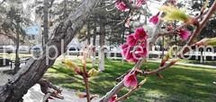 seasons-in-uzbekistan (peopletravelz) Tags: uzbekistan weather climate nature geography seasons travelling trips tourstouzbekistan journey