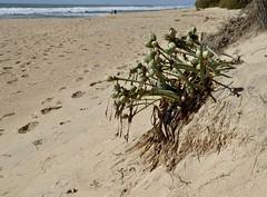 Praia de Faro (Christopher West) Tags: praiadefaro faro algarve