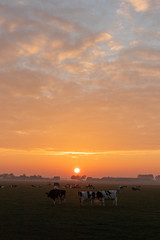 Sunrise Gewande IV (Photography by Martijn Aalbers) Tags: sunrise zonsopgang sun zon nature natuur gewande shertogenbosch denbosch noordbrabant brabant thenetherlands nederland canoneos77d ef1740mmf40lusm