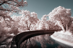 Each Day is a True Fairy Tale (Lolo_) Tags: infrared canal marseille arbres rose arbois aixenprovence mérindole reflection reflet ir 715nm infrarouge