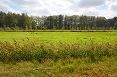 LANDSCAPE (JaapCom) Tags: jaapcom landscape green trees clouds naturel natuur wezep dutchnetherlands