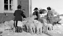 Out at play (theirhistory) Tags: boy children kids jumper jacket shirt wellies sheep lamb animals boots hat