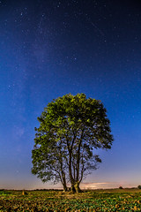 Tree under the stars (Andy barclay) Tags: tree trees field fields grass sky green blue star stars milky way long exposure 30seconds sigma 1020mm nikon d7100 space lightroom louth lincolnshire uk england