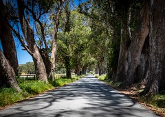 Tree Tunnel on Stage Road 4 (CDay DaytimeStudios w/1,000,000 views) Tags: bluesky california countryroad countryside pacificcoast pacificcoasthighway road sanmateocoast sanmateocounty stageroad trees