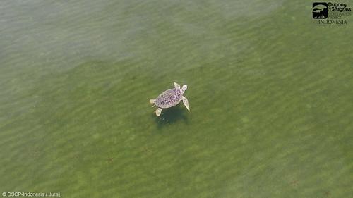 Turtle in Seagrass Habitat