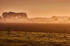 Morning walk in the fog (flowerikka) Tags: acker autumn country earlymorning feld fence field fog france frankreich landscape light meadow mist mistymorning morningwalk normandie regionmanche sky sun trees way