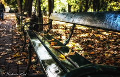 Krakowian autumn 3 (kud4ipad) Tags: 2017 krakow poland beam bench contralight folliage leaves park shadow sun tree