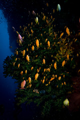 IMG_7443 (Gil Xavier) Tags: underwater scuba philippines canon fantasea g7xmk2 cebu moalbal turtlebay
