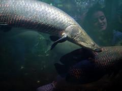 Das Mädchen im Wasser (ingrid eulenfan) Tags: ingrideulenfan zooberlin wasser fisch aquarium fish tier