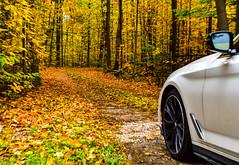 Ontario, Canada (TO416 Original) Tags: autumn drive picture 2018 ontario canada rural milton haltonhills travel leaf season to416 motoroilphotography tofouronesix to416original tourism touristattraction tourist bmw car automobile 540i