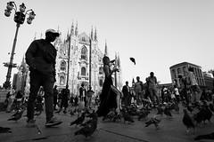 Birds (danielesandri) Tags: milano duomo uccelli fujifilm piazza italia