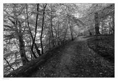 _8208983 mf b&w 01 (Michael Fleischer) Tags: blackwhite morning path trees curved leaves sidelight dark mood forest sigma 1424mm f28 art