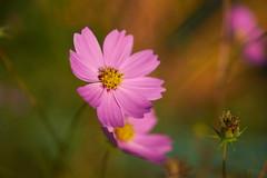 DSC06045 (@saka) Tags: autoupload flowers 73337359 leaves 10791083 street 634637
