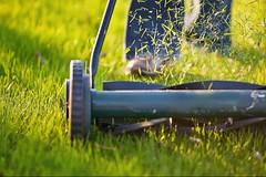 EZ FLO Fertilizer (ezflofertilizer) Tags: ez flo fertilizer how often should you mow your lawn mower