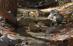 Whitney Portal Stream - 907 (simpsongls) Tags: stream streambed rocks water forest mountwhitney sierra river rock creek