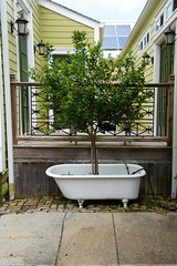 HFF Tree in Tub on Terrace (Omunene) Tags: fence fencefriday tub tree terrace faubourgstjohn neworleans