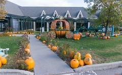 Halloween - Citrouilles, pumpkins - Casino de Charlevoix, P.Q., Canada - 8152 (rivai56) Tags: halloween casinodecharlevoixlamalbaie pq canada 8152 citrouilles punkins casinodecharlevoix pumpkins