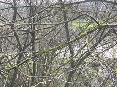 DSCN9815 (Gianluigi Roda / Photographer) Tags: springtime march 2013 creek creeks lavinocreek