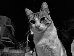 Say my name idiot human...say my name! (Rob Pearson-Wright) Tags: ionion greece street candid blackandwhite bw shotoniphone shotoniphone7plus iphoneography zakinthos zante cat
