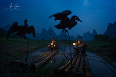 The Cormorant Fishermen of Guilin (Guangxi, China 2016) (Alex Stoen) Tags: alexstoenphotography canoneos1dx china ef1635mmf28liiusm geotagged travel vacation yangshuo